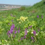 Summer flowers on the coast path
